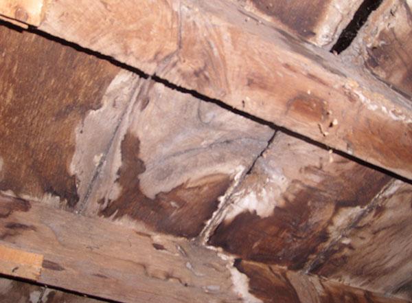 Traitement de l'humidité : présence de mérule dans une maison humide