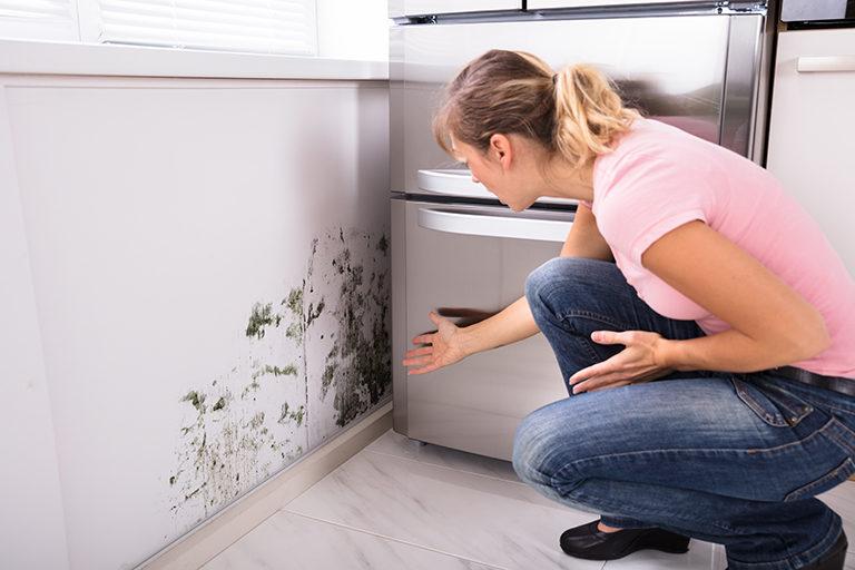 Présence de moisissure sur les murs : traitement anti-humidité