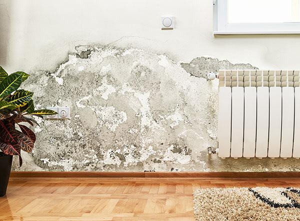 Humidité dans la maison : lutter contre les murs humides
