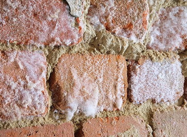Traitement de l'humidité : apparition de salpêtre dans une maison humide